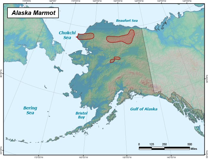 Range map of Alaska Marmot in Alaska