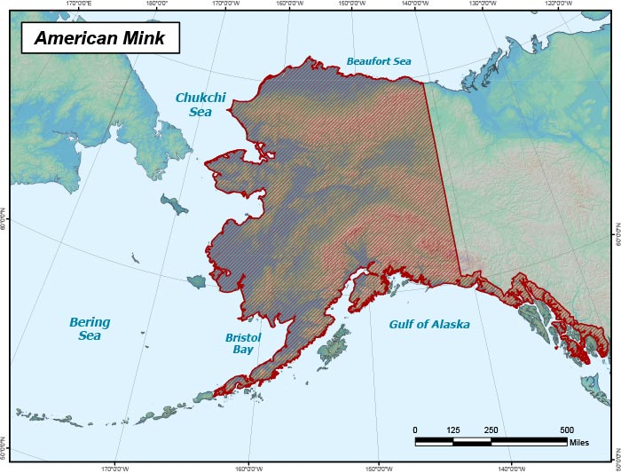 Range map of American Mink in Alaska