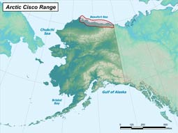 Arctic Cisco range map
