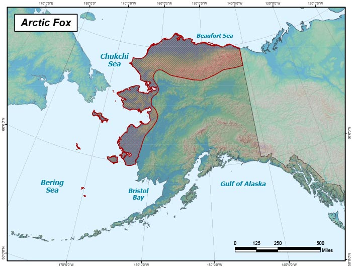 Range map of Arctic Fox in Alaska