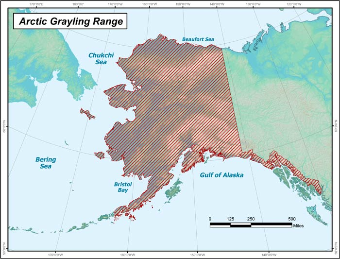 Range map of Arctic Grayling in Alaska