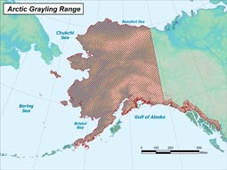 Arctic Grayling range map