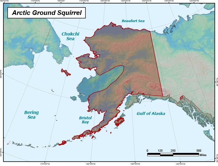 Range map of Arctic Ground Squirrel in Alaska