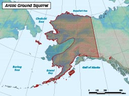 Arctic Ground Squirrel range map