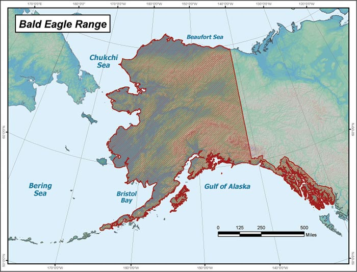 Bald Eagle Range Map Alaska Department of Fish and Game