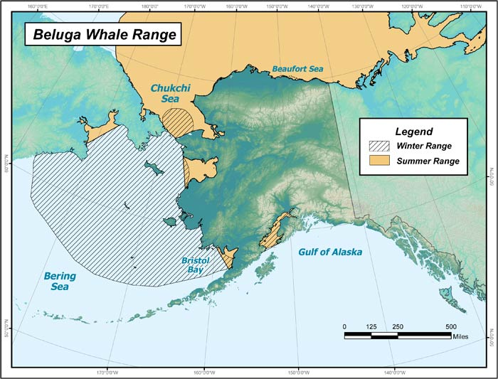 Range map of Beluga Whale in Alaska