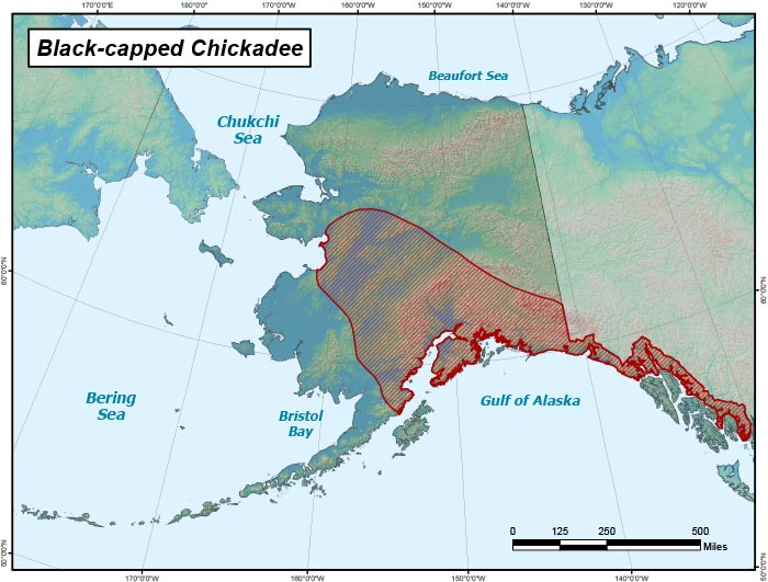 Range map of Black-capped Chickadee in Alaska