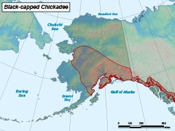 Black-capped Chickadee range map