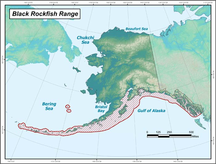 Range map of Black Rockfish in Alaska