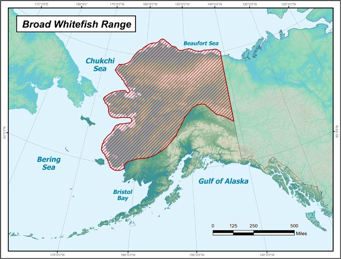 Range map of Broad Whitefish in Alaska