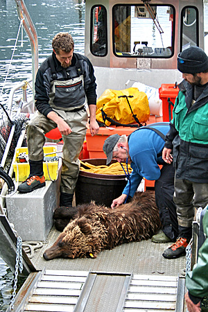 Alaska Dept Fish  Game on Brown Bear Photo Gallery  Alaska Department Of Fish And Game