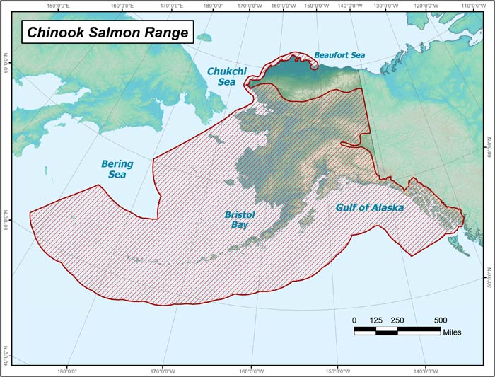Range map of Chinook Salmon in Alaska