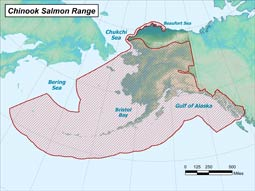 Chinook Salmon range map