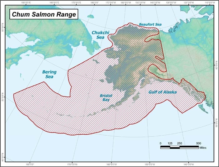 Chum salmon range map alaska department of fish and game range map of chum salmon in alaska gumiabroncs Image collections