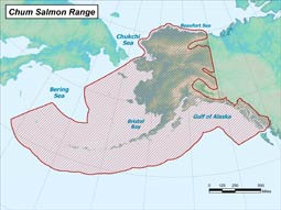 Chum Salmon range map