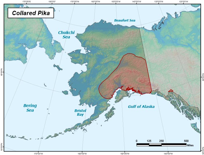 Range map of Collared Pika in Alaska