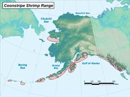 Coonstripe Shrimp range map
