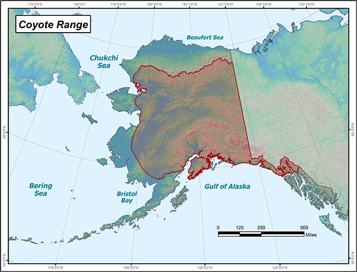 Range map of Coyote in Alaska