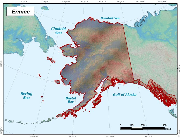 Range map of Ermine in Alaska