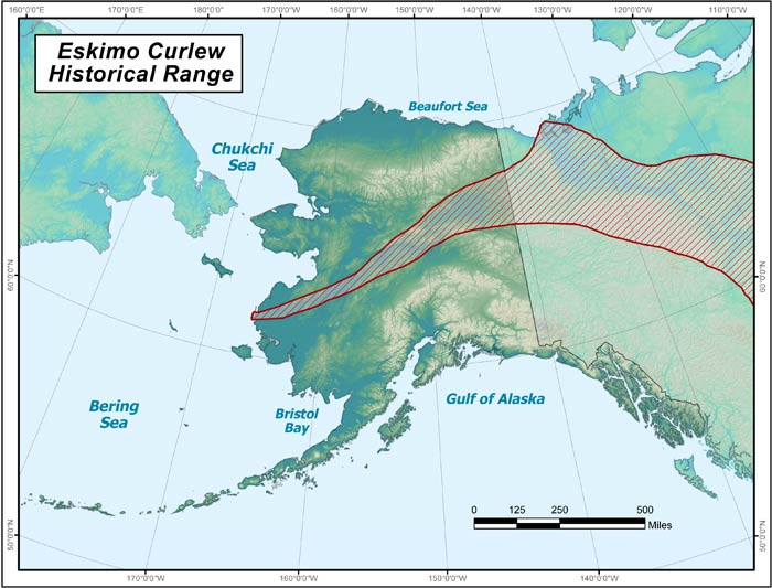 Range map of Eskimo Curlew in Alaska