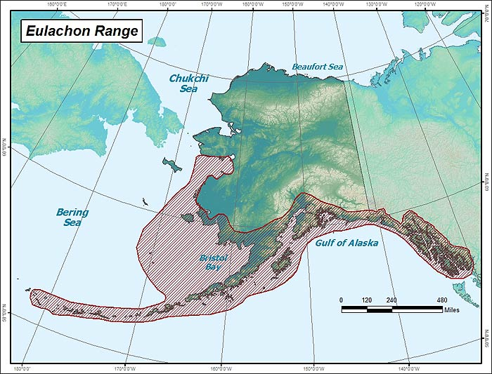 Range map of Eulachon in Alaska