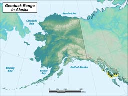 Geoduck Clam range map