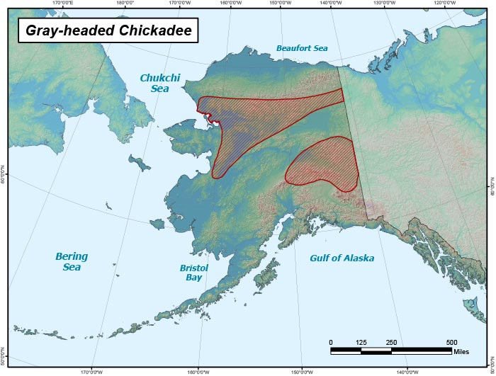 Range map of Gray-headed Chickadee in Alaska