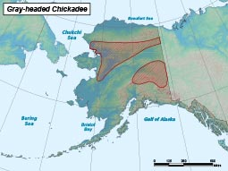 Gray-headed Chickadee range map