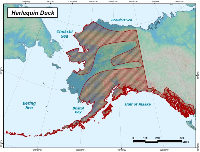 Range map of Harlequin Duck in Alaska