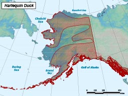 Harlequin Duck range map