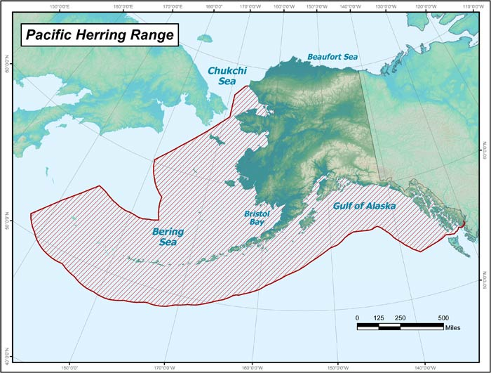Range map of Pacific Herring in Alaska