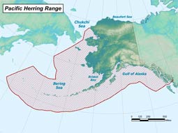 Pacific Herring range map