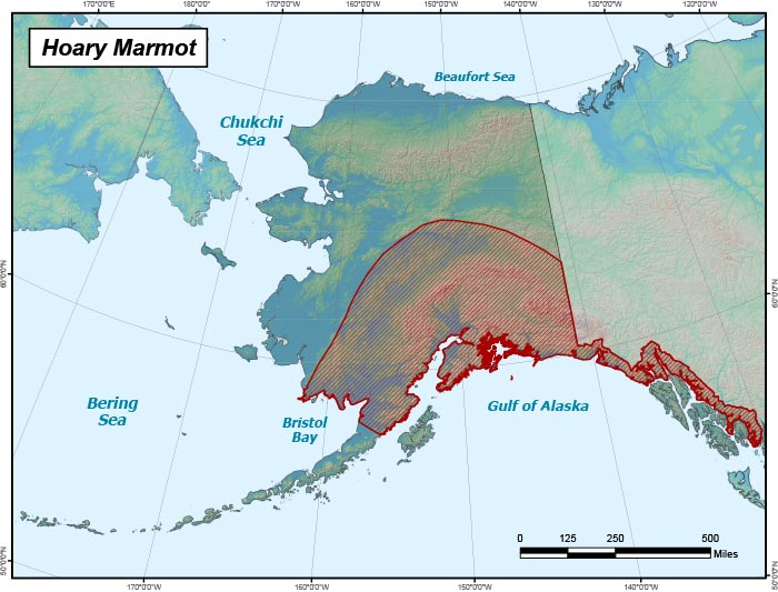 Range map of Hoary Marmot in Alaska