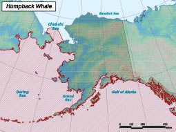 Humpback Whale range map