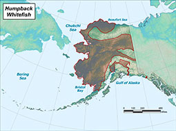 Humpback Whitefish range map