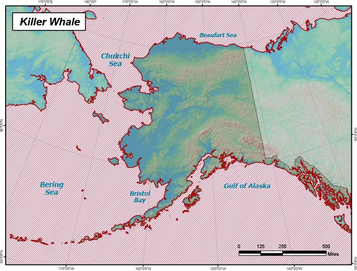 Range map of Killer Whale in Alaska