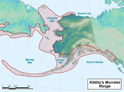 Kittlitz's Murrelet range map