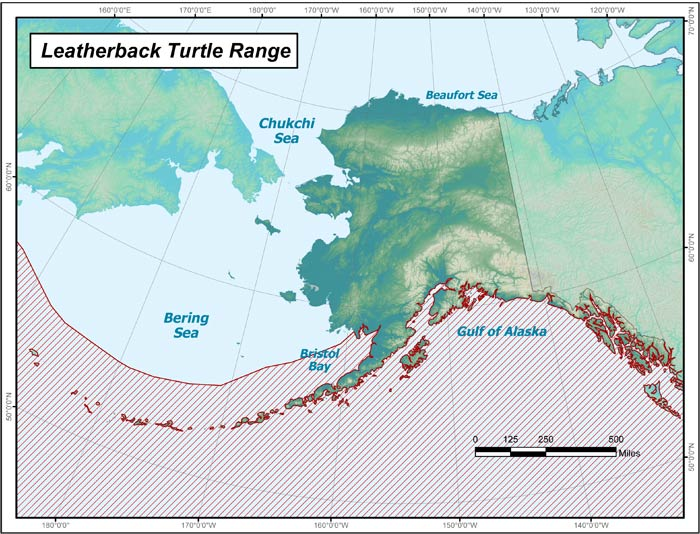 Range map of Leatherback Sea Turtle in Alaska