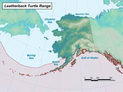 Leatherback Sea Turtle range map
