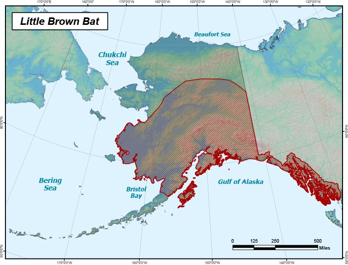 Range map of Little Brown Bat in Alaska