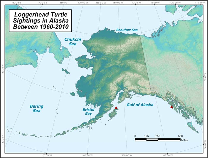 Range map of Loggerhead Sea Turtle in Alaska