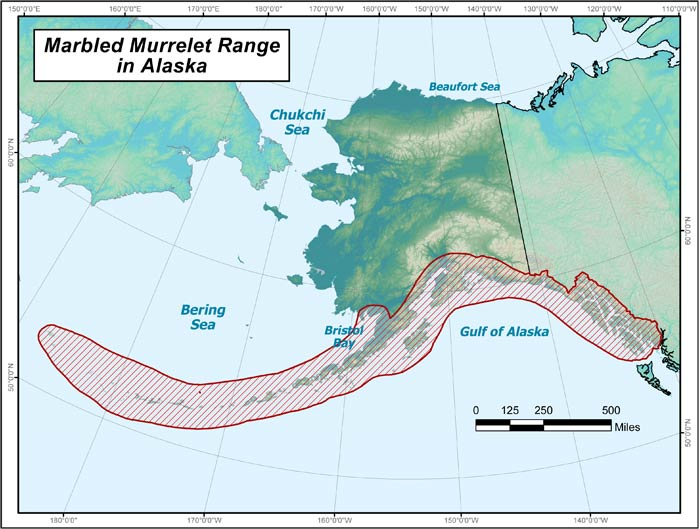 Range map of Marbled Murrelet in Alaska