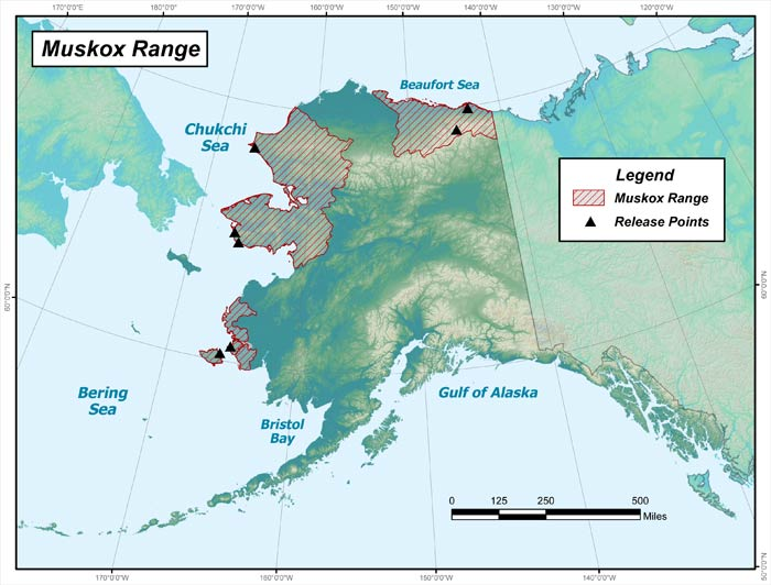 Range map of Muskox in Alaska