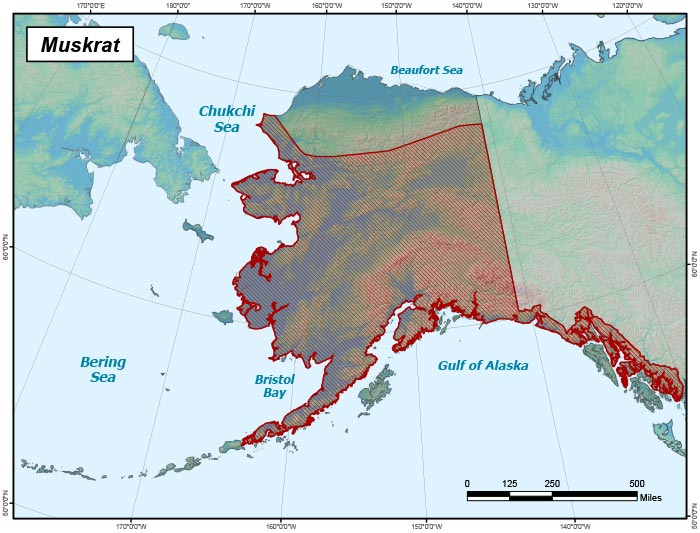 Range map of Muskrat in Alaska