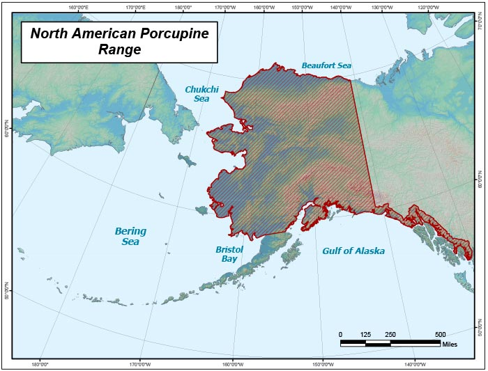 Range map of North American Porcupine in Alaska