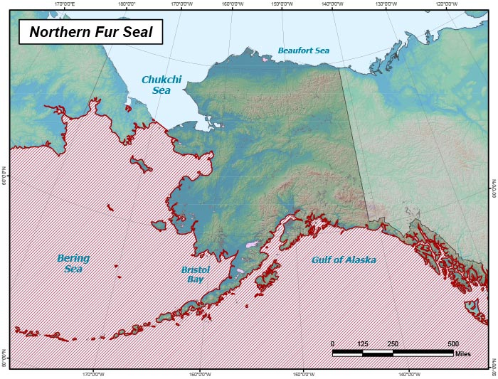 Range map of Northern Fur Seal in Alaska