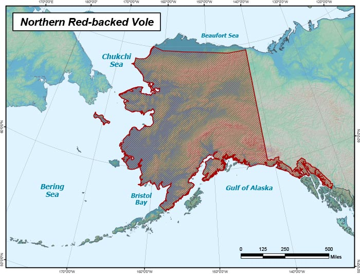 Range map of Northern Red-backed Vole in Alaska