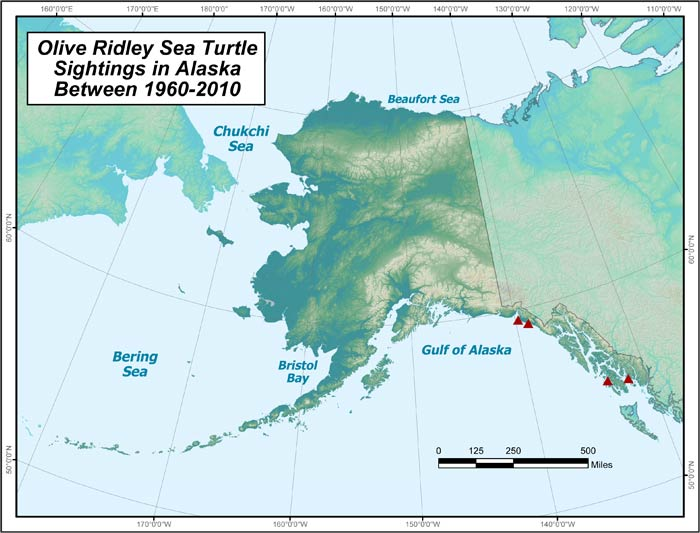 Range map of Olive Ridley Sea Turtle in Alaska
