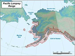 Pacific Lamprey range map