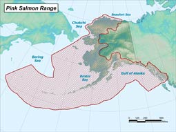 Pink Salmon range map